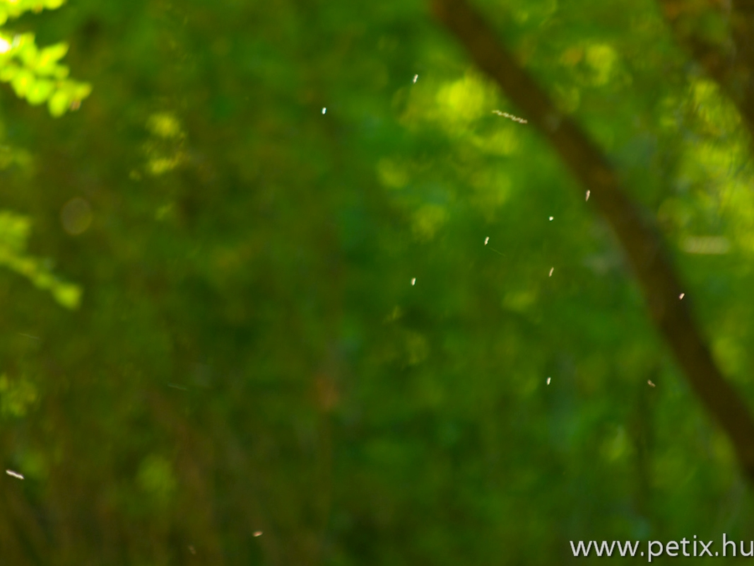 20120427_SMAFC-Nagykanizsa_74