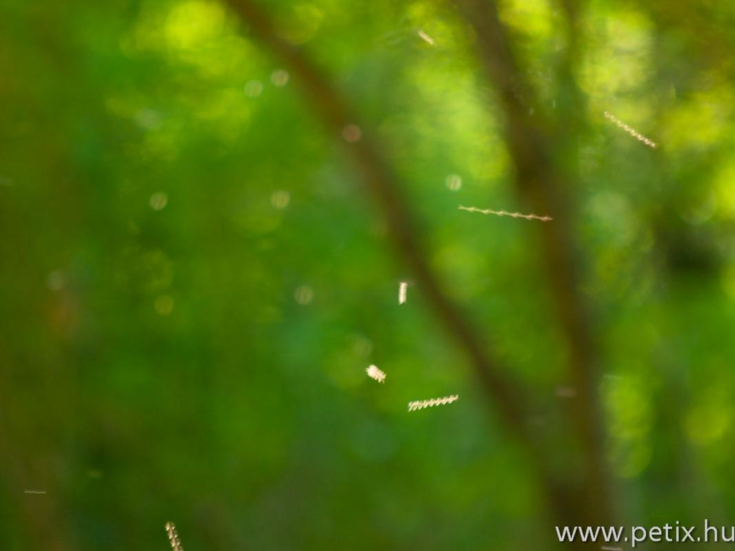 20120427_SMAFC-Nagykanizsa_75